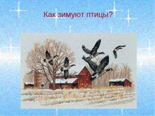 Как зимуют птицы?