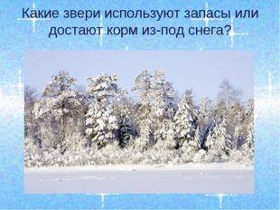 Какие звери используют запасы или достают корм из-под снега?