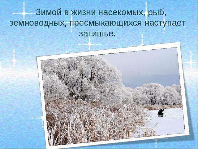 Зимой в жизни насекомых, рыб, земноводных, пресмыкающихся наступает затишье.