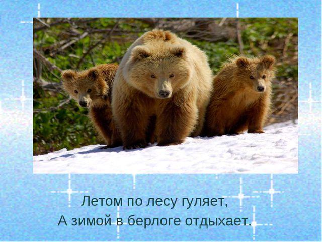 Летом по лесу гуляет, А зимой в берлоге отдыхает.