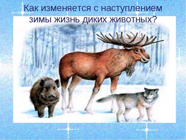 Как изменяется с наступлением зимы жизнь диких животных?