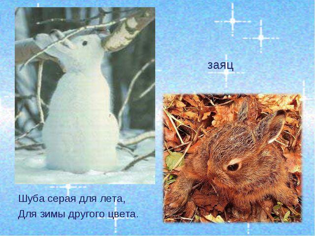Шуба серая для лета, Для зимы другого цвета. заяц