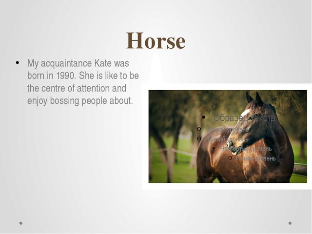 Horse My acquaintance Kate was born in 1990. She is like to be the centre of...