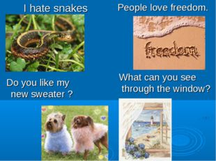 I hate snakes People love freedom. What can you see through the window? Do yo