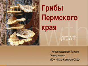 Грибы Пермского края Новокрещенных Тамара Геннадьевна МОУ «Юго-Камская СОШ»