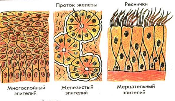 C:\Documents and Settings\test\Рабочий стол\image002 (1).jpg