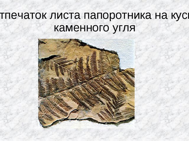 Отпечаток листа папоротника на куске каменного угля