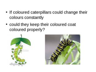 If coloured caterpillars could change their colours constantly could they kee