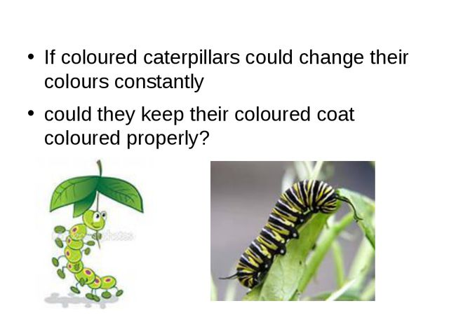 If coloured caterpillars could change their colours constantly could they kee...