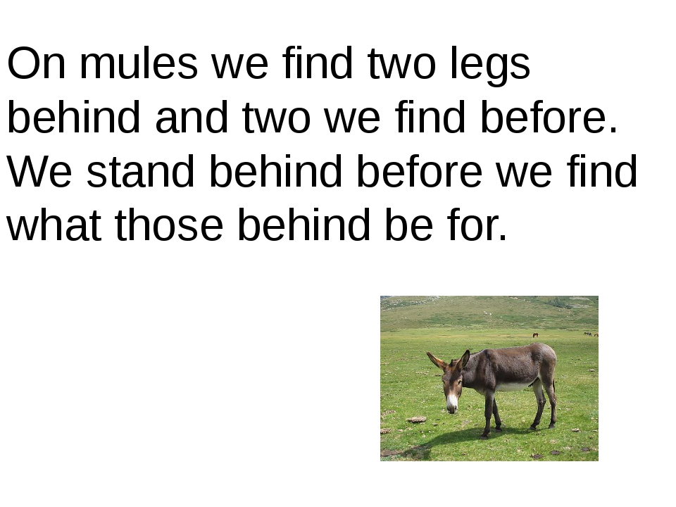 On mules we find two legs behind and two we find before. We stand behind befo...