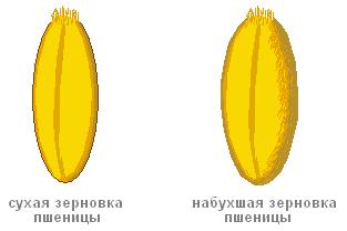 http://fishinggold.ru/wp-content/uploads/2014/03/%D0%BD%D0%B0%D0%B1%D1%83%D1%85%D1%88%D0%B0%D1%8F-%D0%BF%D1%88%D0%B5%D0%BD%D0%B8%D1%86%D0%B0.png
