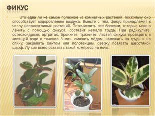 Это едва ли не самое полезное из комнатных растений, поскольку оно способств