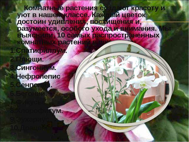 Комнатные растения создают красоту и уют в нашем классе. Каждый цветок досто...