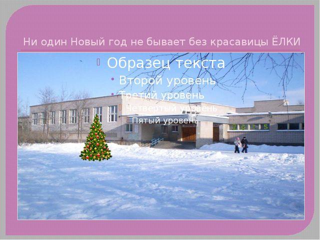 Ни один Новый год не бывает без красавицы ЁЛКИ