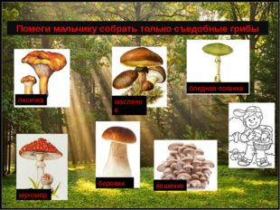 Помоги мальчику собрать только съедобные грибы мухомор бледная поганка лисич