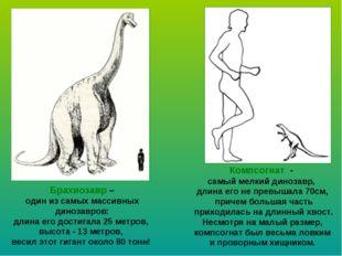 Брахиозавр – один из самых массивных динозавров: длина его достигала 25 метро