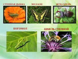 ПЛАН РАБОТЫ 1. Почему этих животных называют насекомыми? 2. Особенности стро