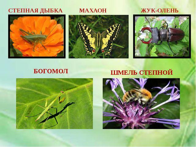 ПЛАН РАБОТЫ 1. Почему этих животных называют насекомыми? 2. Особенности стро...