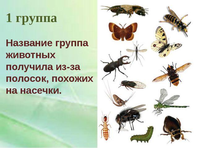 1 группа Название группа животных получила из-за полосок, похожих на насечки.