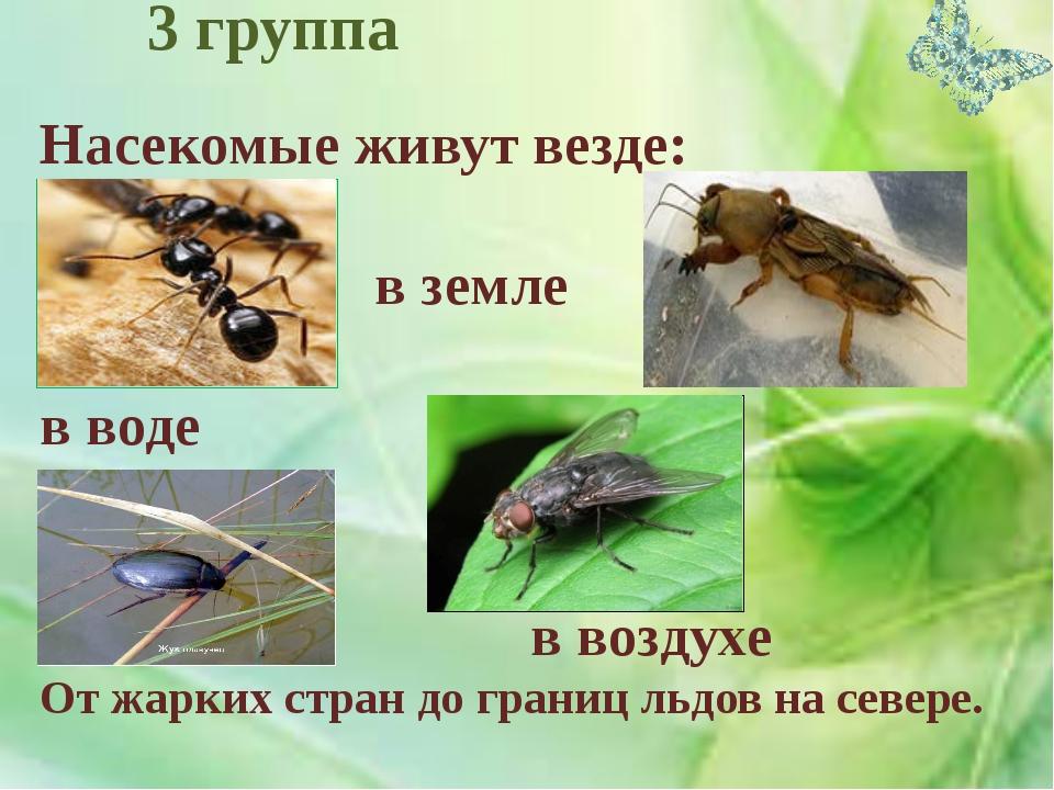 Насекомые живут везде: в почве в земле в воде в воздухе От жарких стран до г...
