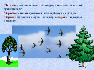 Ласточки низко летают - к дождю, а высоко - к теплой сухой погоде. Воробьи в