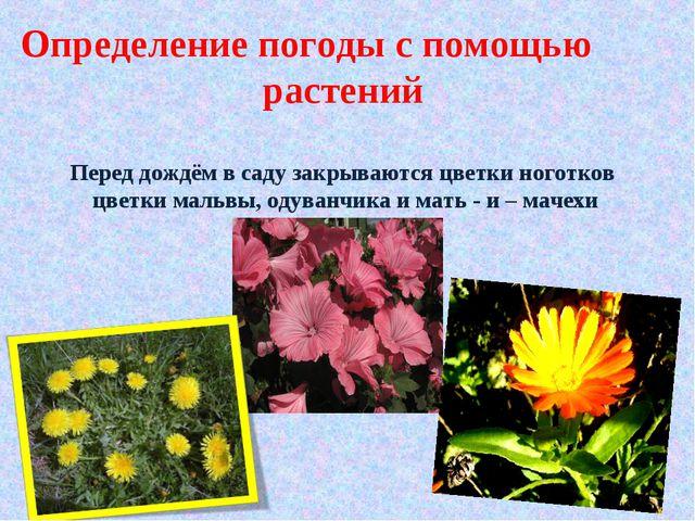 Определение погоды с помощью растений Перед дождём в саду закрываются цветки...