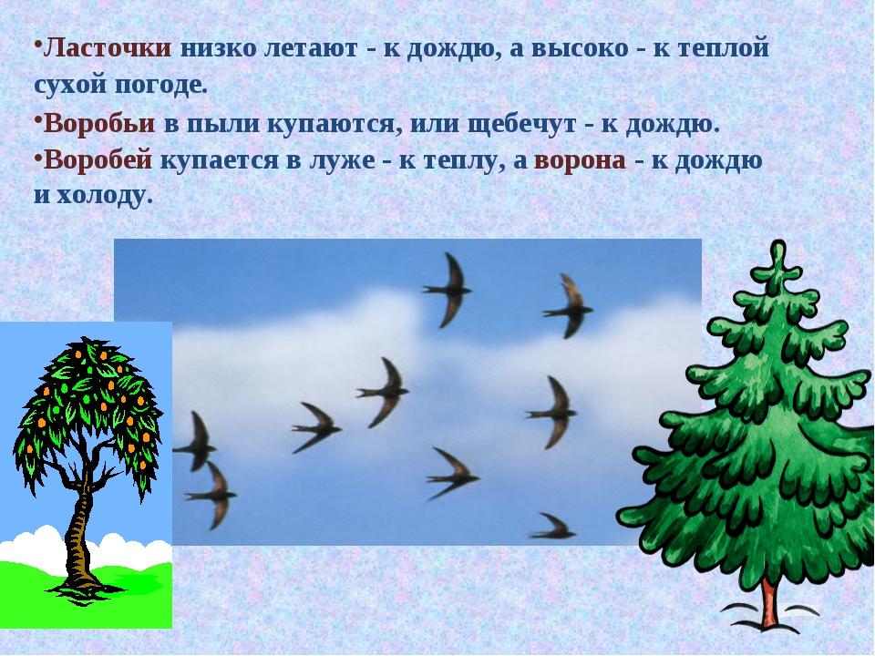 Ласточки низко летают - к дождю, а высоко - к теплой сухой погоде. Воробьи в...