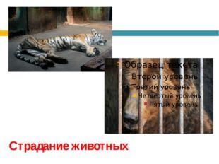 Страдание животных