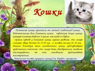 Кошки - Домашняя кошка произошла от степной (ливийской) кошки. Родоначальница