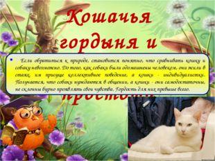 Кошачья гордыня и собачья простота Если обратиться к природе, становится поня