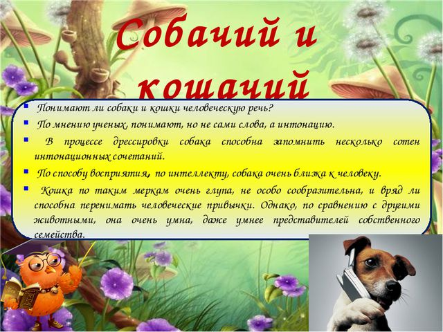 Собачий и кошачий диалект Понимают ли собаки и кошки человеческую речь? По мн...