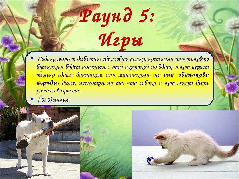 Раунд 5: Игры Собака может выбрать себе любую палку, кость или пластиковую бу...