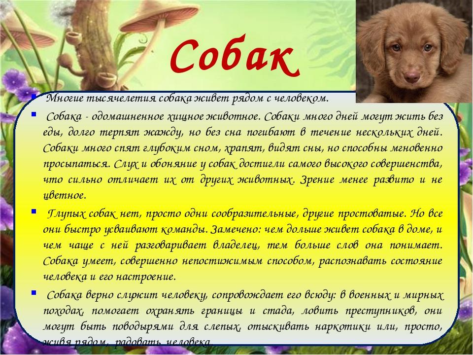 Собаки Многие тысячелетия собака живет рядом с человеком. Собака - одомашненн...