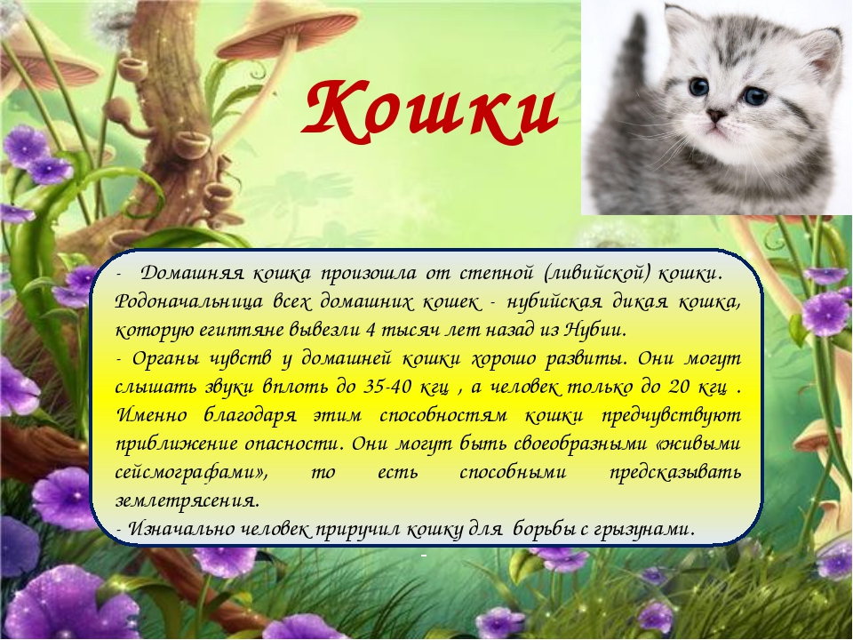 Кошки - Домашняя кошка произошла от степной (ливийской) кошки. Родоначальница...