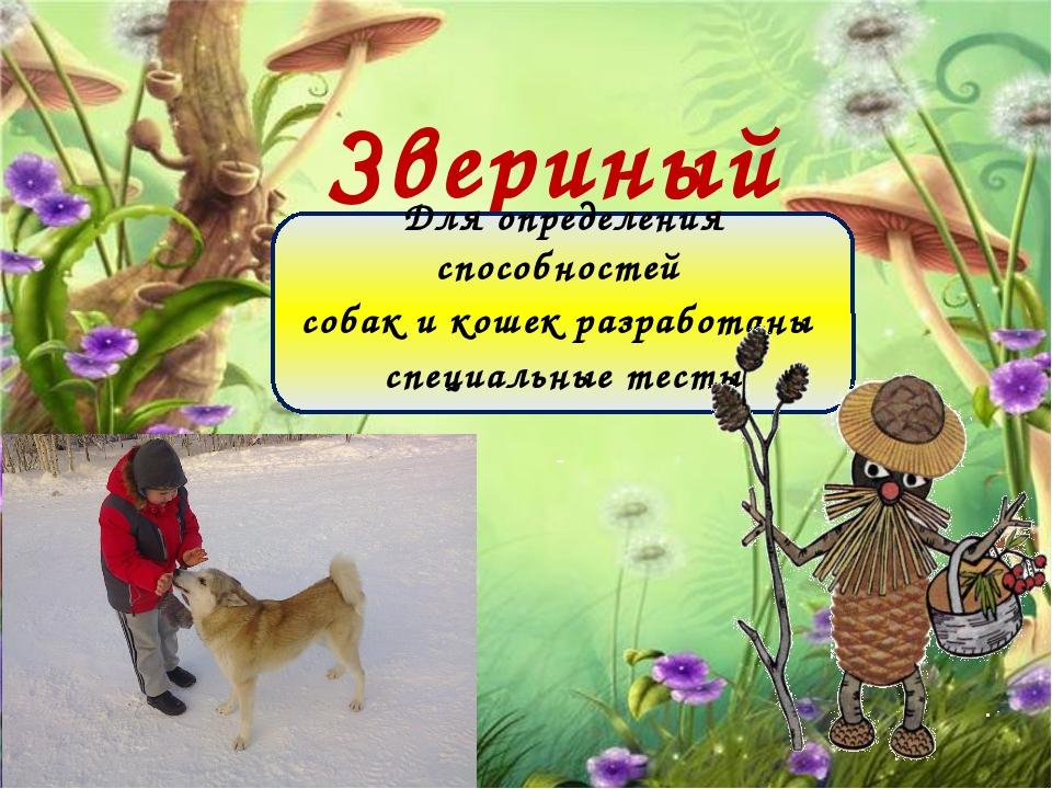 Звериный IQ Для определения способностей собак и кошек разработаны специальны...