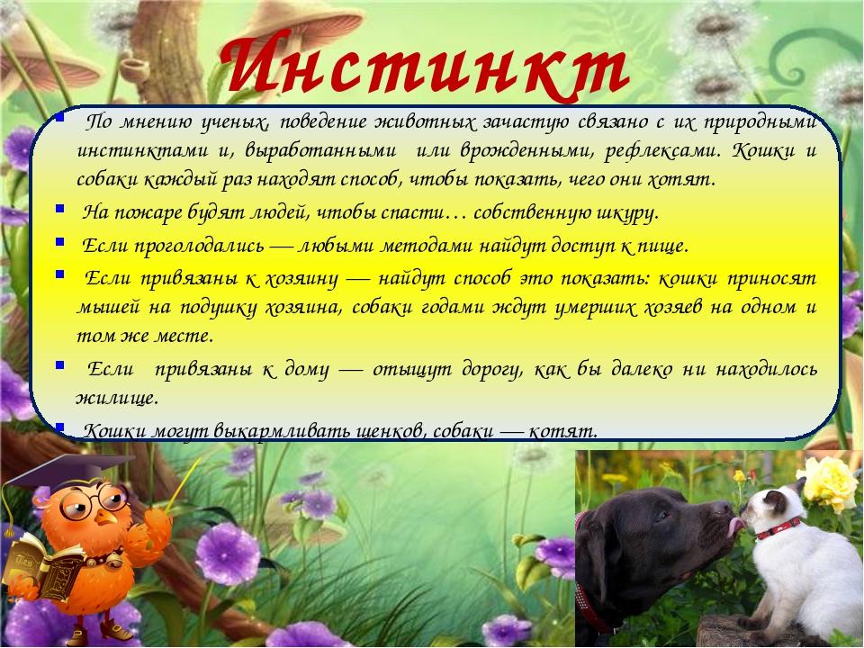 Инстинкты По мнению ученых, поведение животных зачастую связано с их природны...