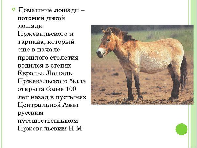 Домашние лошади – потомки дикой лошади Пржевальского и тарпана, который еще в...