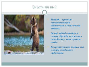 Знаете ли вы? Медведь – крупный млекопитающий, обитающий в лесах нашей страны