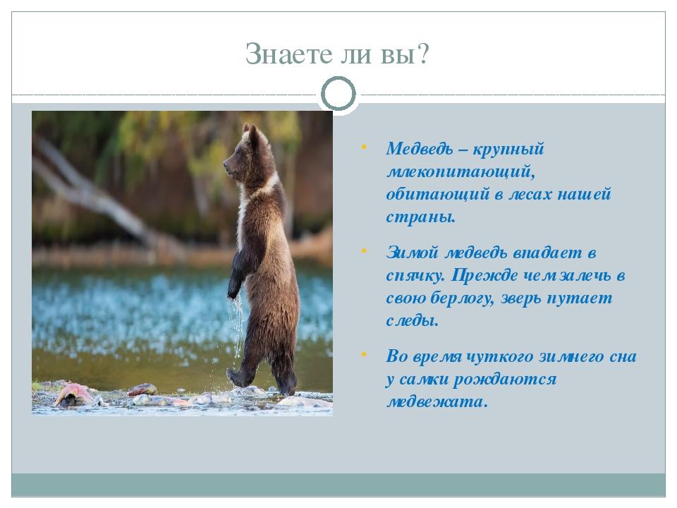 Знаете ли вы? Медведь – крупный млекопитающий, обитающий в лесах нашей страны...