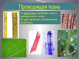 Проводящая ткань А) древесина (проводит воду и минеральные соли); Б) луб (про