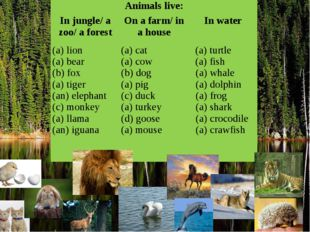 Animals live: In jungle/ a zoo/ a forest On a farm/ in a house In water lion
