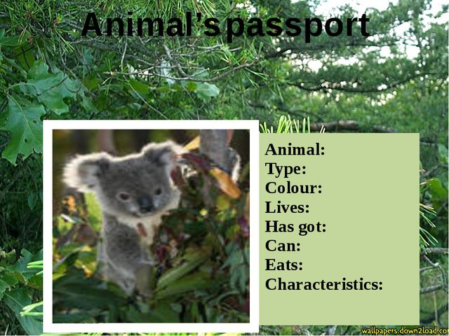 Animal's passport Animal: Type: Colour: Lives: Has got: Can: Eats: Characteri...