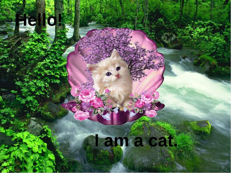 Hello! I am a cat.