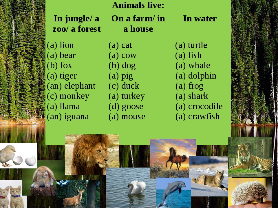 Animals live: In jungle/ a zoo/ a forest On a farm/ in a house In water lion...