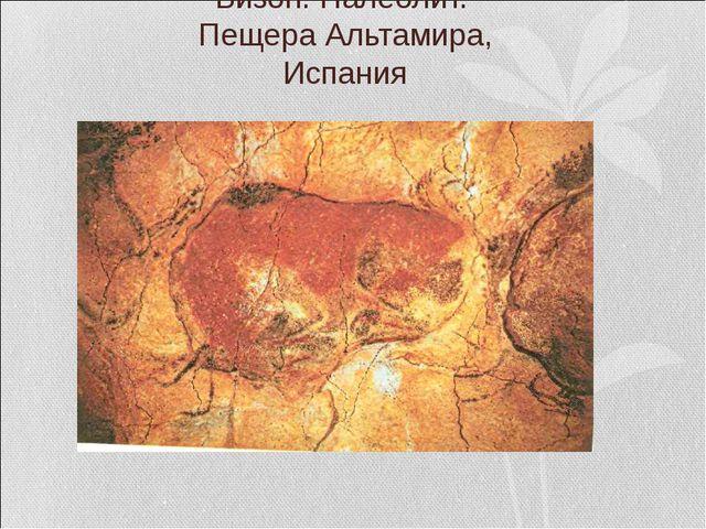 Бизон. Палеолит. Пещера Альтамира, Испания