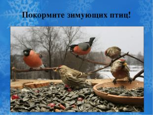 Покормите зимующих птиц!
