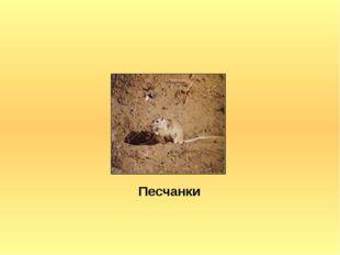 Песчанки