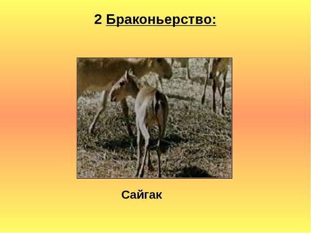 2 Браконьерство: Сайгак