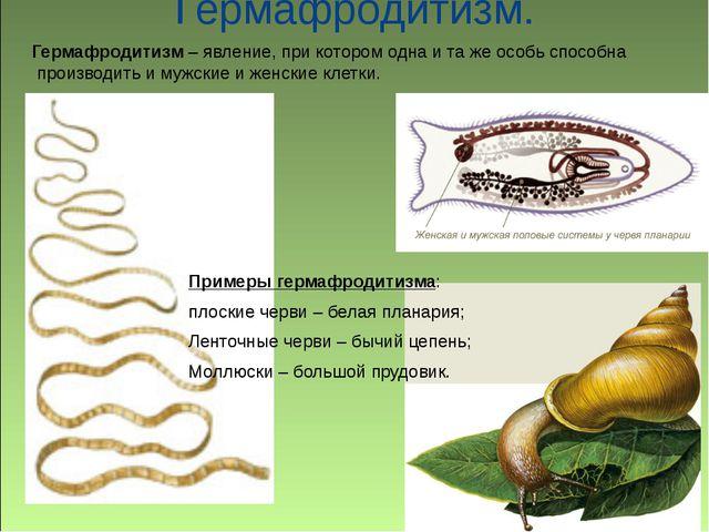Гермафродитизм. Примеры гермафродитизма: плоские черви – белая планария; Лен...