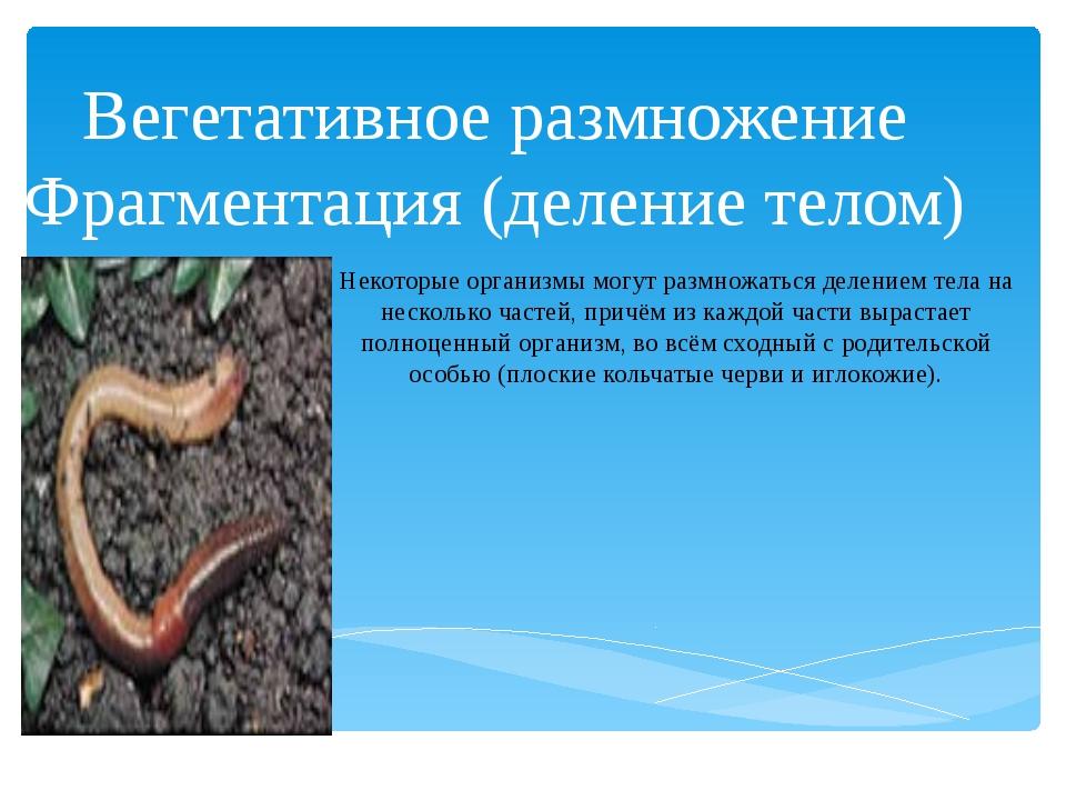 Вегетативное размножение Фрагментация (деление телом) Некоторые организмы мог...